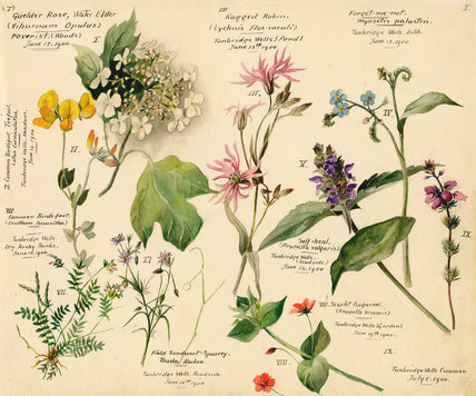 Wildflower composite