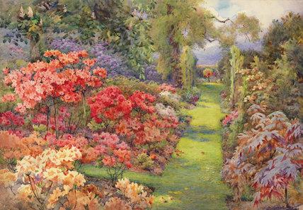 Rhododendrons, Dyffryn