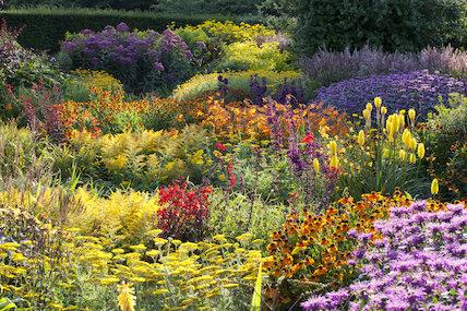 Borders in the Hot Garden at RHS Garden Rosemoor, Devon.