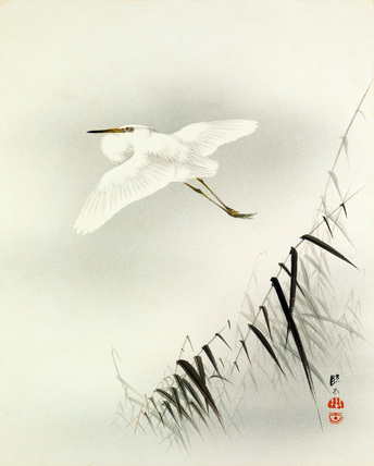 Bambusa with egret