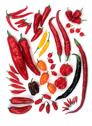 Chilli Varieties By At Royal Horticultural Society