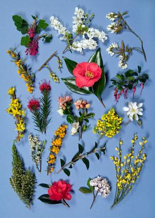 Spring flowering shrubs plate