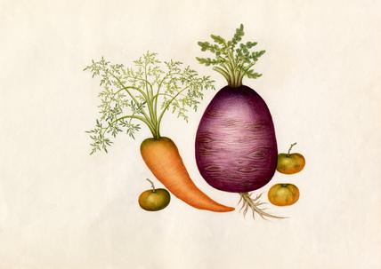 Brassica rapa, Daucus carota, Lycopersicon esculentum