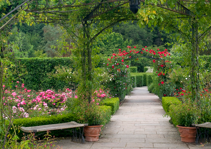 The Queen Mother's Garden