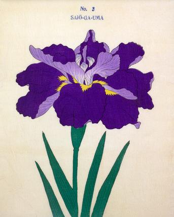 Iris Saio-Ga-Uma