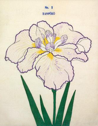 Iris Tanporo