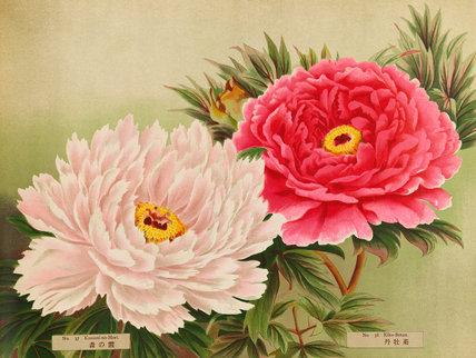 No.37 Kasumi-No-Mori and No.38 Kiku-Botanis