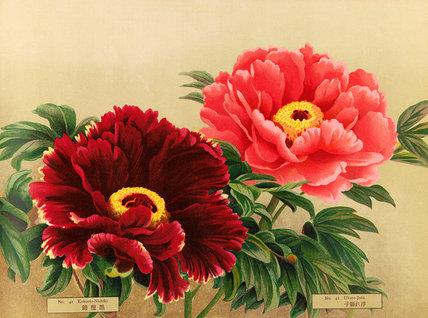 No. 41 Kokuriu-Nishiki and No.42 Ukare-Jishi