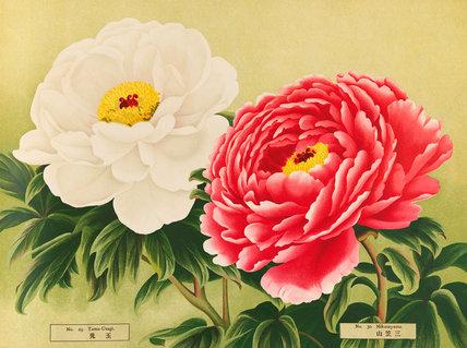 No. 29 Tama-Usagi and No.30 Mikasayama