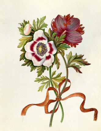 'Anemones'