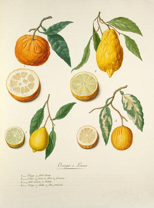 'Oranges et Limons'
