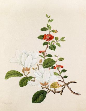 [Chaenomeles japonica, Magnolia denudata]