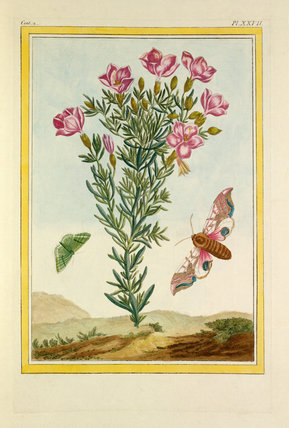 Plate XXVII