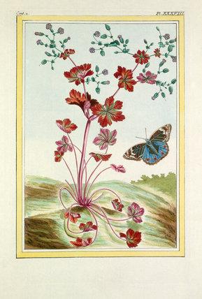 Plate XXXVIII