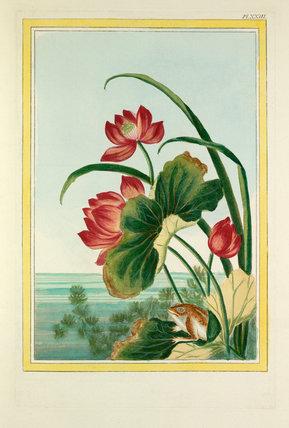 Plate XXIII