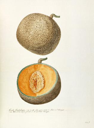 Grande Cantaloupe