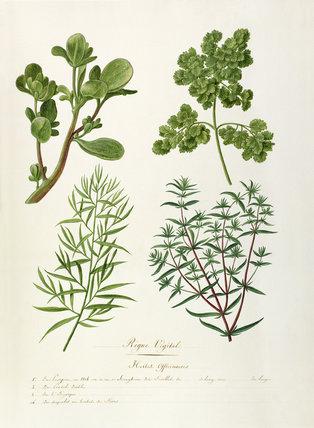 Herbier officionares